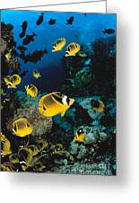Diver And Butterflyfish Greeting Card by Dave Fleetham - Printscapes