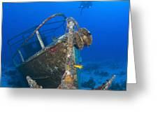 Divers Visit The Pelicano Shipwreck Greeting Card by Karen Doody