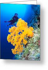 Diving, Australia Greeting Card by Dave Fleetham - Printscapes