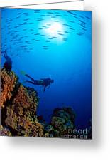 Diving Scene Greeting Card by Ed Robinson - Printscapes