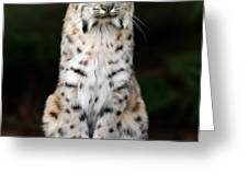 Divinity Greeting Card by Big Cat Rescue