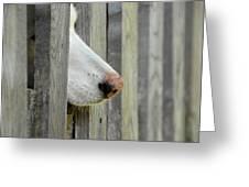 Dog Nose Greeting Card by Joye Ardyn Durham