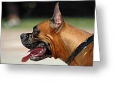 Dog Tired Dog Greeting Card by Dan Holm