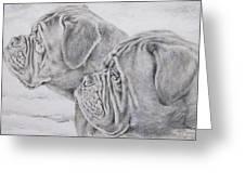 Dogue De Bordeaux Greeting Card by Keran Sunaski Gilmore