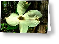 Dogwood Blossom I Greeting Card by Julie Dant