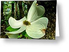 Dogwood Blossom II Greeting Card by Julie Dant