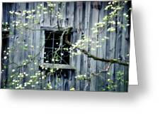 Dogwood Blossoms  Greeting Card by Thomas Schoeller