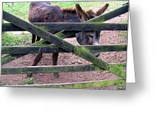 Donkey Ready Greeting Card by Mindy Newman