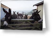 Donkeys Greeting Card by Dawn OConnor