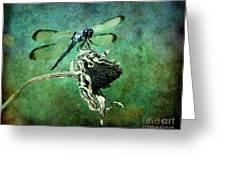 Dragonfly Art Greeting Card by Sari Sauls