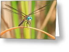 Dragonfly Greeting Card by Everet Regal