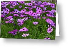 Dreaming Of Purple Daisies  Greeting Card by Carol Groenen