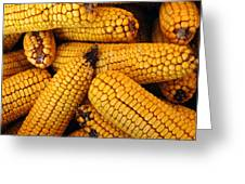 Dried Corn Cobs Greeting Card by LeeAnn McLaneGoetz McLaneGoetzStudioLLCcom