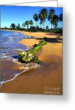 Driftwood And Palm Trees Greeting Card by Thomas R Fletcher