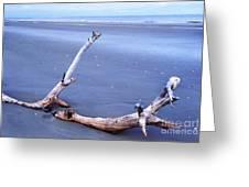 Driftwood Little St Simons Island Greeting Card by Thomas R Fletcher