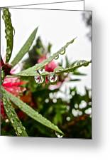 Drip And Drop Greeting Card by Gwyn Newcombe