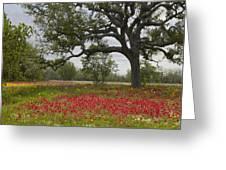 Drummonds Phlox Meadow Near Leming Texas Greeting Card by Tim Fitzharris