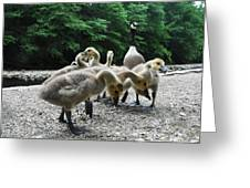 Ducklings Greeting Card by Bill Cannon