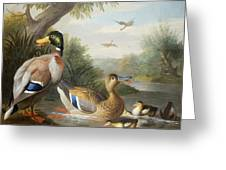 Ducks In A River Landscape Greeting Card by Jakob Bogdany
