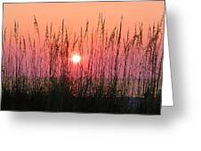 Dune Grass Sunset Greeting Card by Bill Cannon