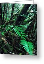Dwarf Forest El Yunque Greeting Card by Thomas R Fletcher