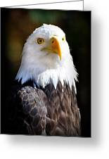 Eagle 14 Greeting Card by Marty Koch