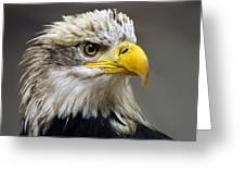 Eagle Greeting Card by Harry Spitz