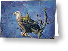 Eagle In The Eye Of The Storm Greeting Card by Bonnie Barry
