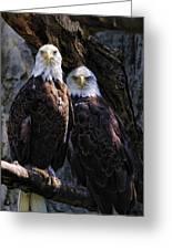 Eagles Greeting Card by Edward Sobuta