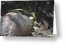 Earth Egg Greeting Card by Dawn Whitehand