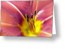 Easter Lily 3 Greeting Card by Tony Cordoza