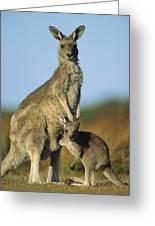 Eastern Grey Kangaroo And Her Joey Greeting Card by Ingo Arndt