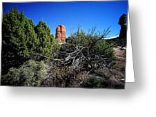 Edge Of Life Arches Greeting Card by Lawrence Christopher