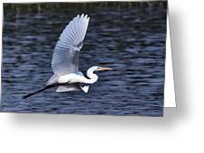 Egret VI Greeting Card by Gary Adkins