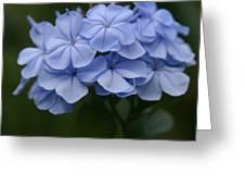 Eia Au La E Ke Aloha Blue Plumbago Greeting Card by Sharon Mau