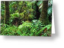 El Yunque Lush Vegetation Greeting Card by Thomas R Fletcher