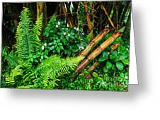 El Yunque National Forest Ferns Impatiens Bamboo Mirror Image Greeting Card by Thomas R Fletcher