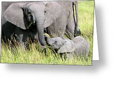 Elephants - Little Sister Greeting Card by Nancy D Hall