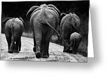 Elephants In Black And White Greeting Card by Johan Elzenga