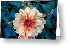Emergence Greeting Card by Torie Tiffany