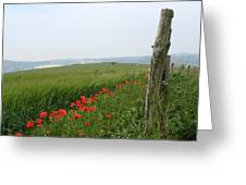 England Sussex Poppy Field Greeting Card by Yvonne Ayoub