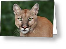 Enya Greeting Card by Big Cat Rescue