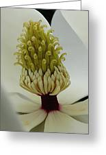 Essence Greeting Card by Vari Buendia