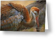 Evolving Sandhill Crane Beauty Greeting Card by Carol Groenen