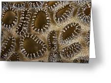 Extreme Close-up Of A Crust Anemone Greeting Card by Terry Moore