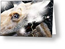 Extreme Fear Greeting Card by Cathy  Beharriell