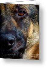 Eye Of The Shepherd Greeting Card by Jai Johnson