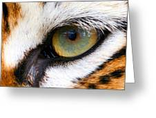Eye of the Tiger Greeting Card by Helen Stapleton