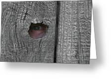 Eye On Life Greeting Card by Douglas Barnett