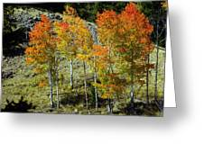 Fall In Colorado Greeting Card by Marty Koch